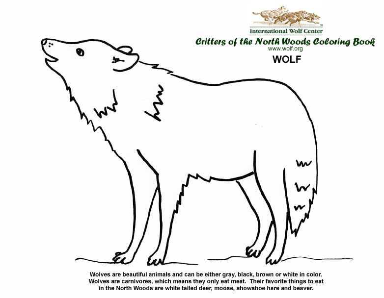 Wolf Coloring page for Wolf unit | Classroom Ideas | Cub ...
