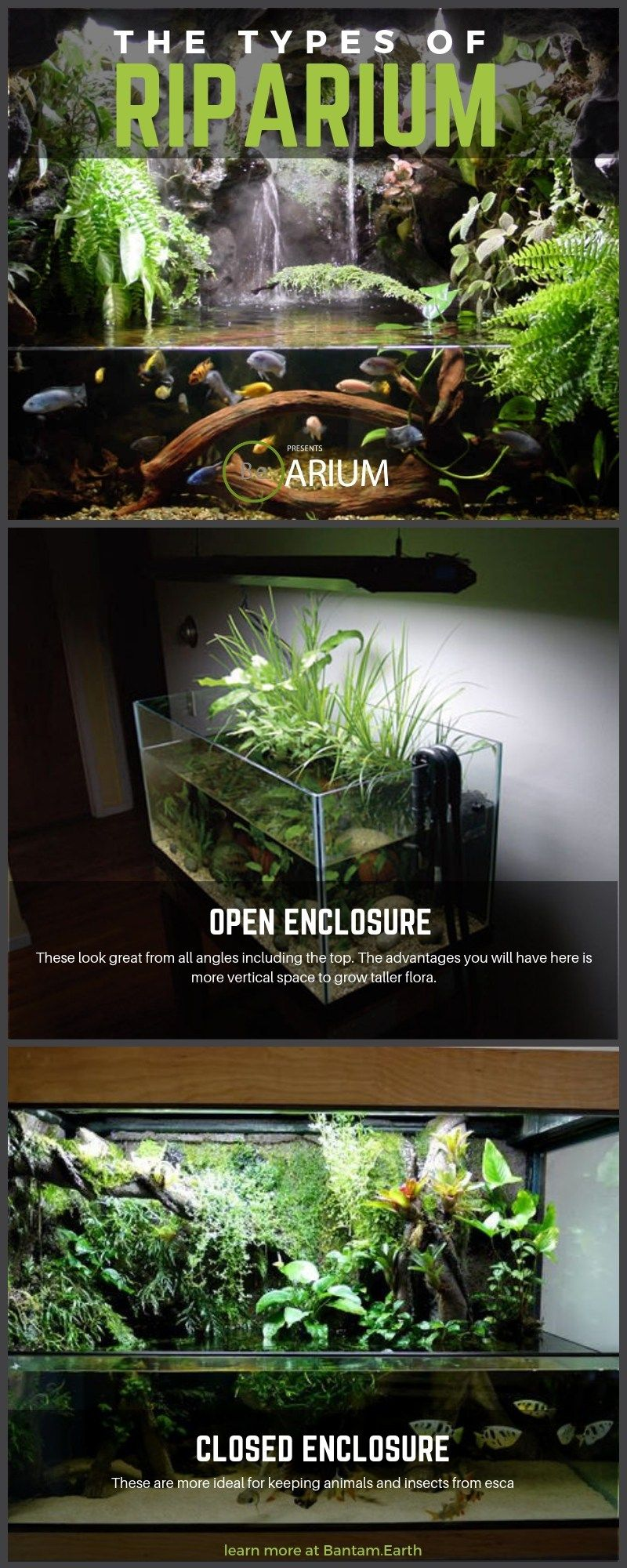 riparium the ultimate guide how to build vivarium ideas