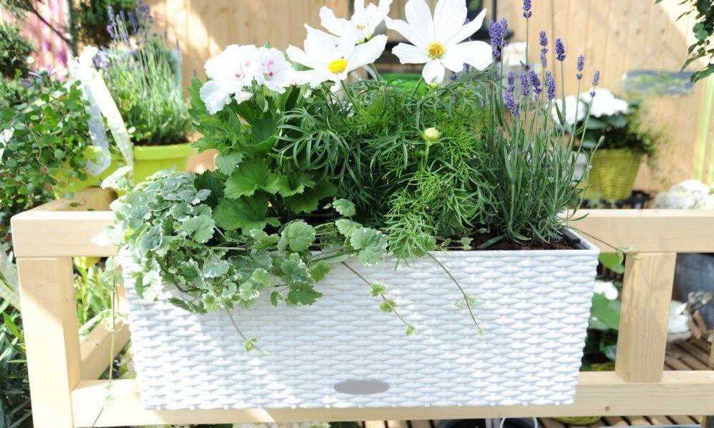 Pachnace Rosliny Na Balkon I Taras Taras Balkon Plants