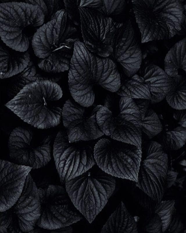 Nature Black Aesthetic Black Flowers Black Wallpaper