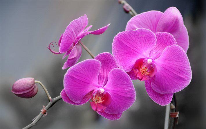 foto de Télécharger fonds d'écran L'orchidée, de la branche d'orchidées ...