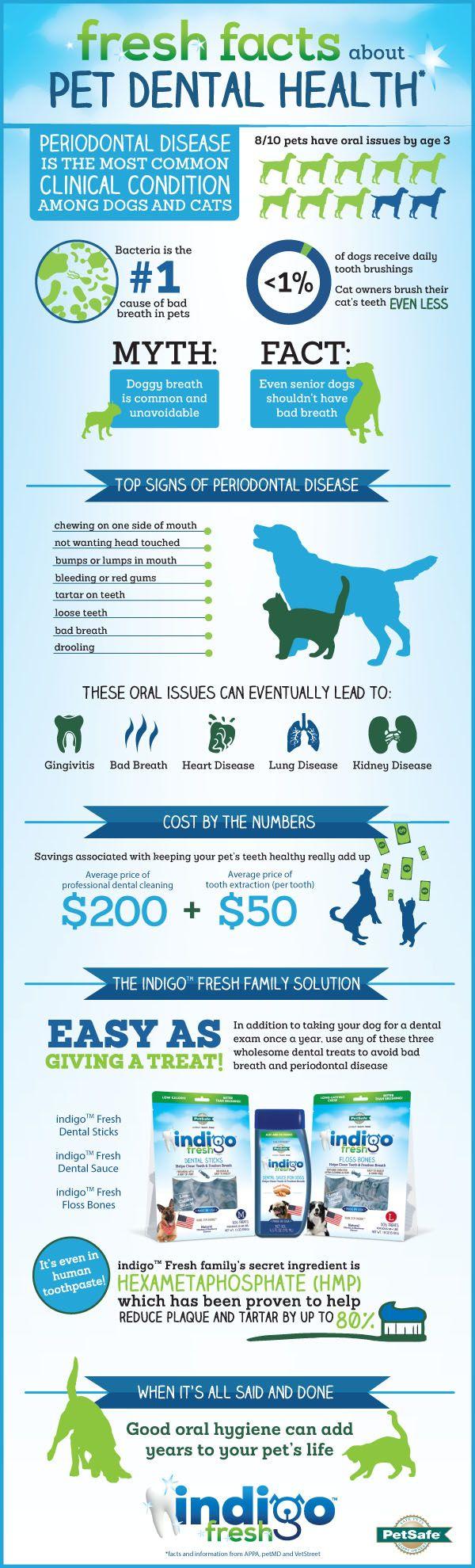 Pet Dental Health Information Pet Dental Health Pet Dental Care Dental Health