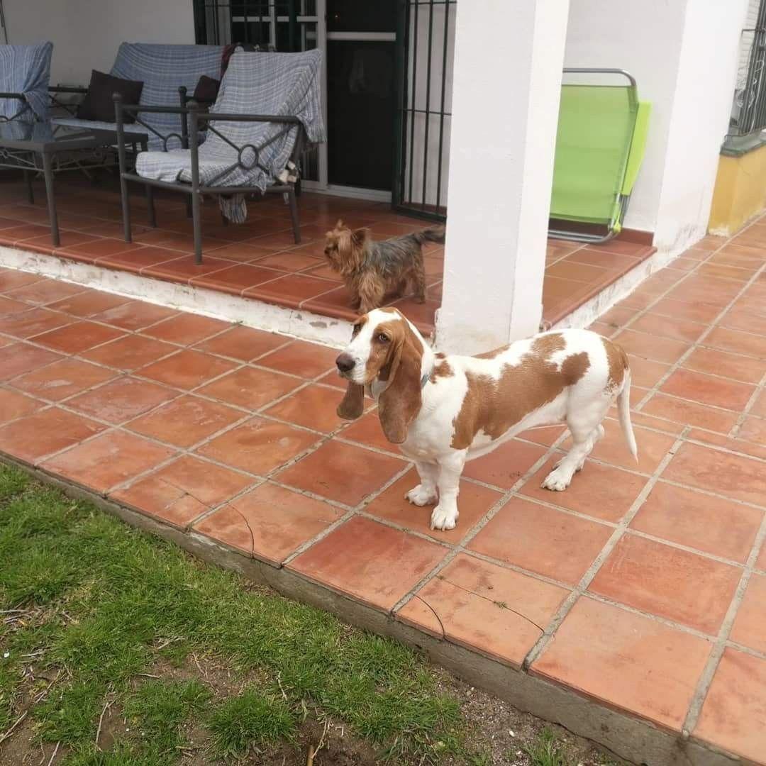 #Ratosencasa con #Penny #Lia #Yuna #Benita #Milo #Chico 🏡 🐶 🐕 03/18 * * #Disfrutar #enjoying #enjoy #disfrutamos #Disfrutandoeldía #DisfrutandoAndo #Fotos #fotografia #photography #Foto #Photo #Mascotas #Mascottes #Pets #Mascot #Dogs #Shaggy #Furry #Hairy #Ilovedog #Dog #Gatos #Cats #gato #Ilovecats #Noalabandono #adoptanocompres #RincóndelaVictoria