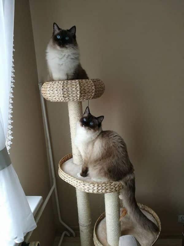 Arbre à chat Natural Home III Cats, Animals