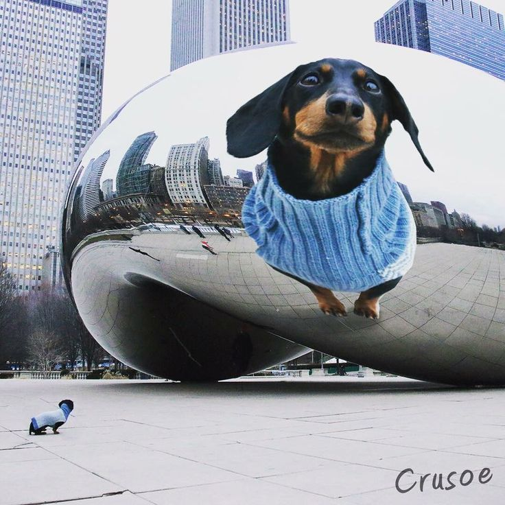 Is It Just Me Or Does The Chicago Bean Make Me Look Tall Crusoe
