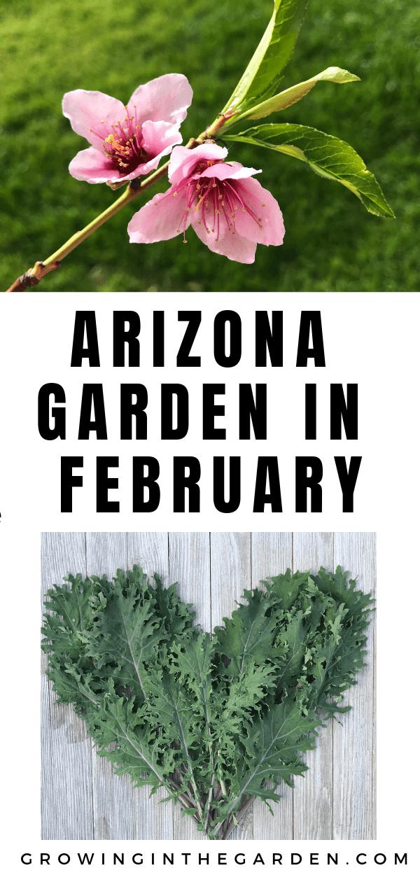 Arizona Garden in February Arizona gardening, Small