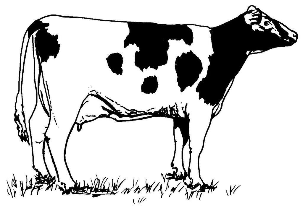 Coloriage Vache - Les beaux dessins de Animaux à imprimer ...