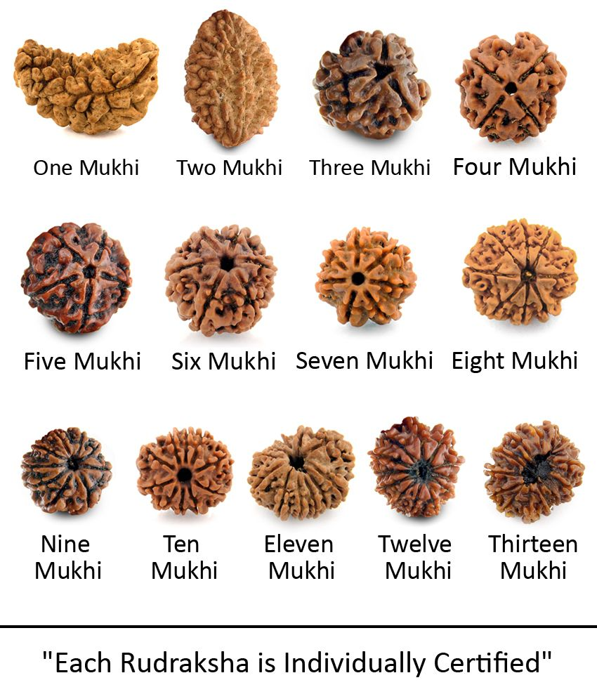 Contact best store of Rudraksha for shopping in Delhi name Vedic ...