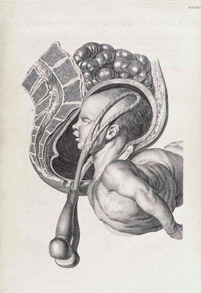 forceps | Anatomy | Pinterest