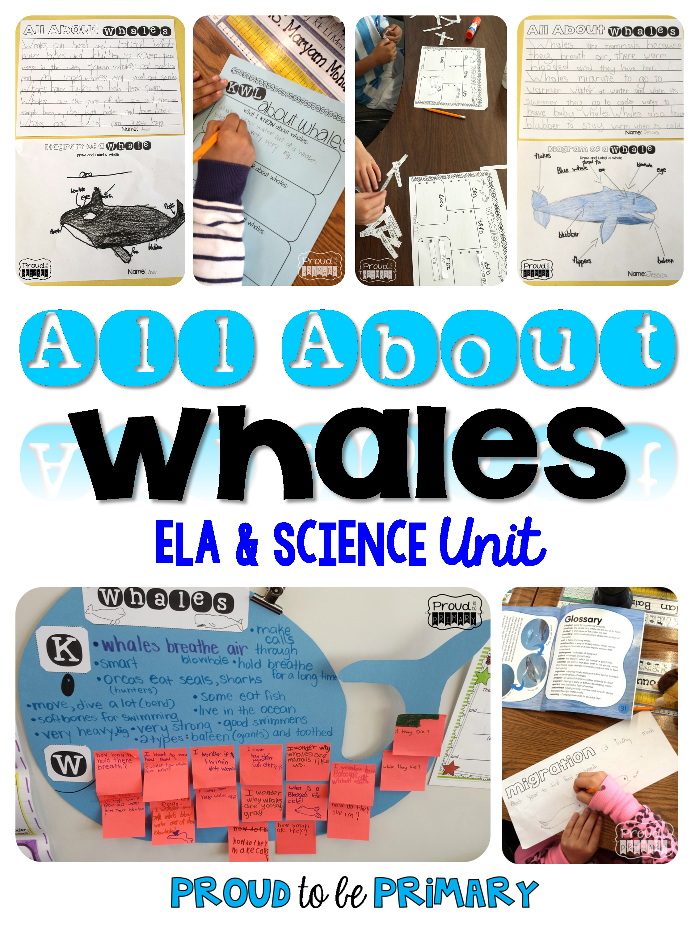Whale Science Amp Non Fiction Ela Unit Ela