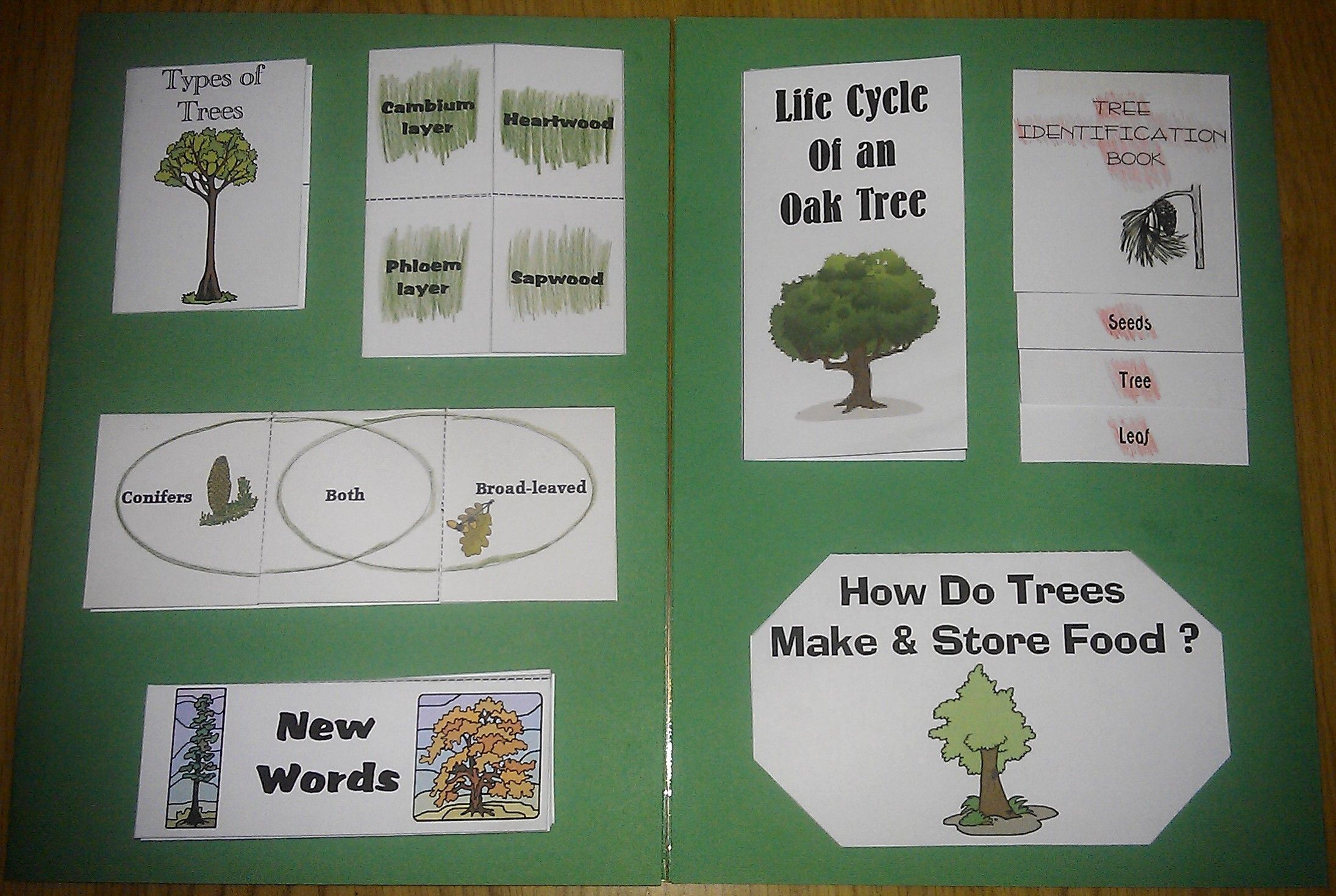 Trees Lapbook | Ciencia | Pinterest