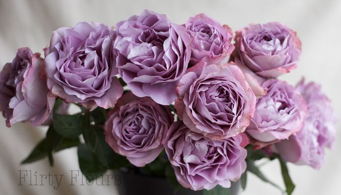 Lavender Bouquet Garden Roses Grown Alexandra Roses Photography By
