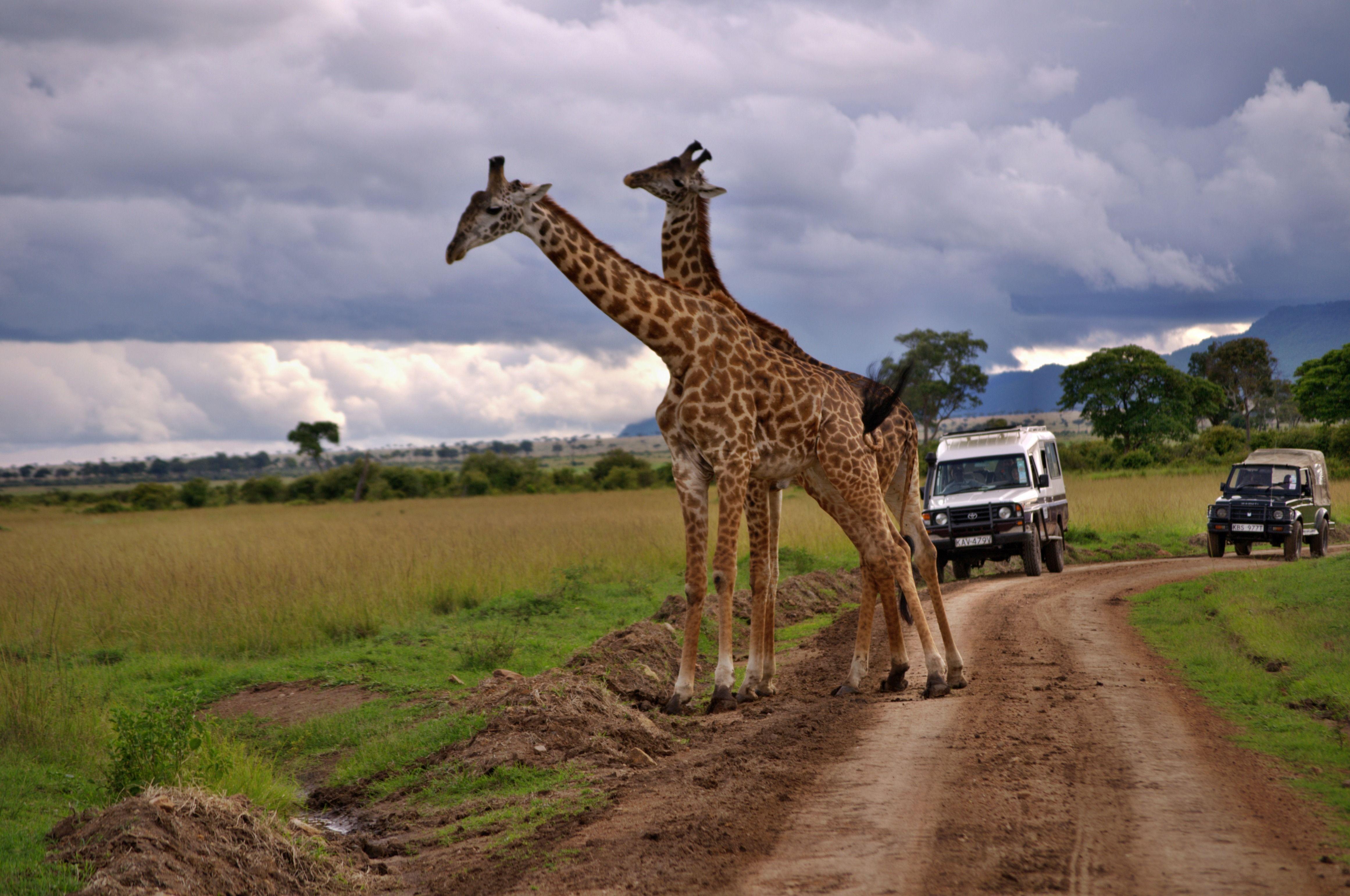 11-DAYS BEST OF KENYA AND TANZANIA BUDGET SAFARI MAASAI MARA