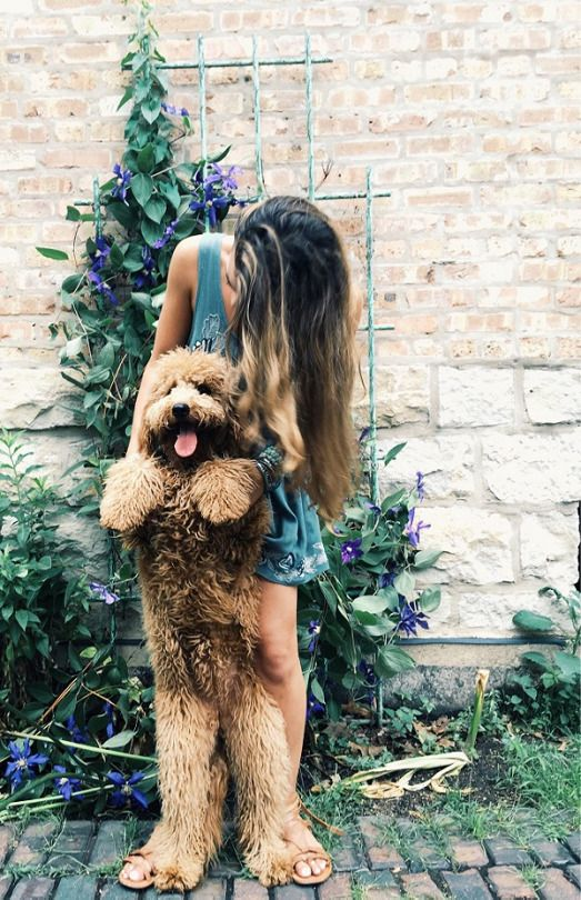 Freepeople Dogs She Dog Cute Animals