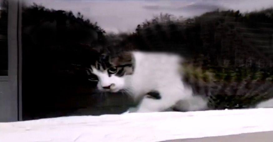 Mailman Battles Cat