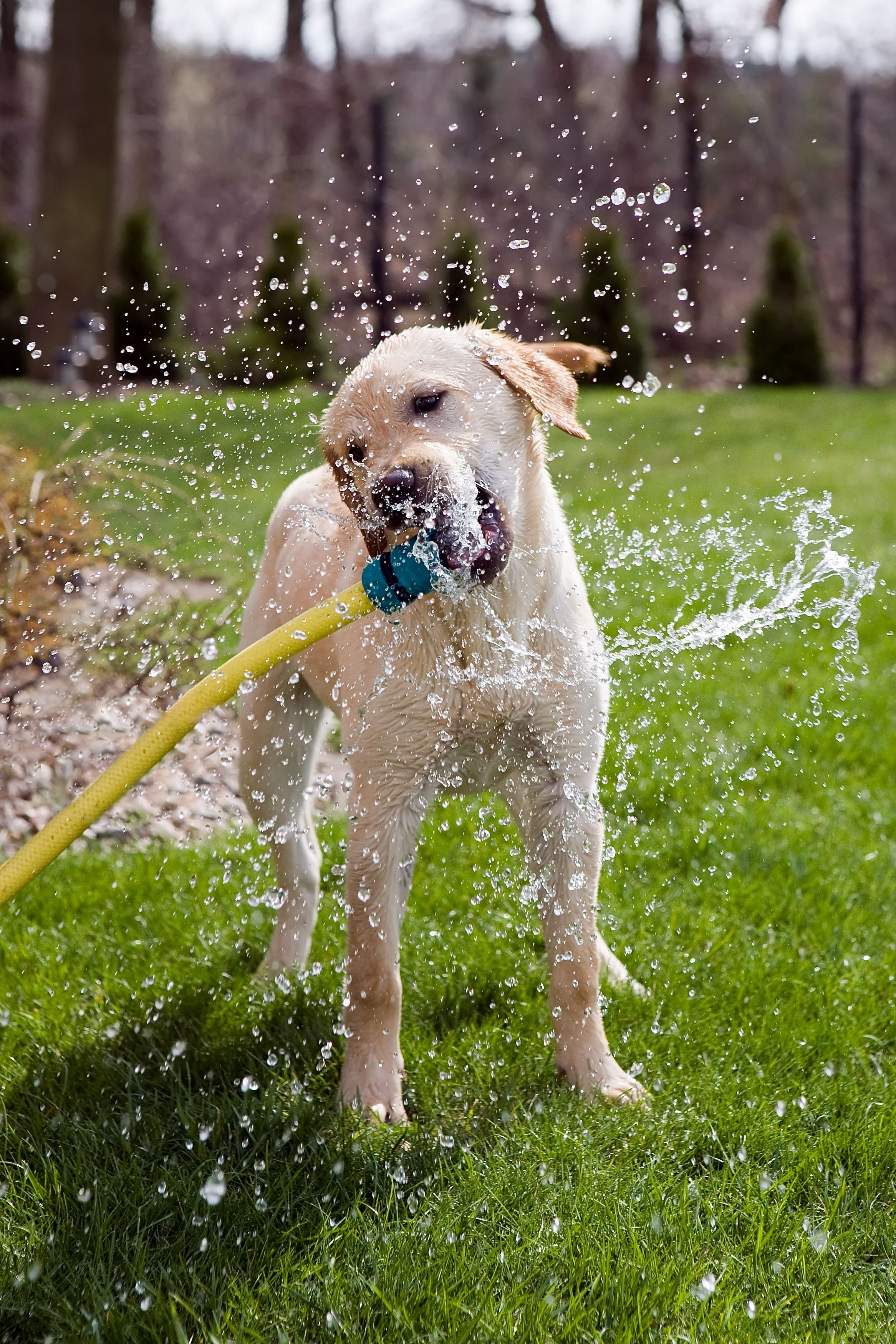 Water Intoxication In Pets 5 Signs To Watch For Dogs