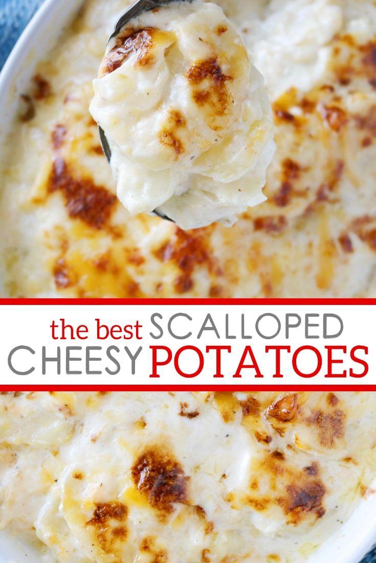 Cheesy Creamy Scalloped Potatoes #russetpotatorecipes