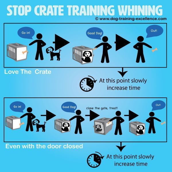 Stop Crate Training Whining Dog Training Pinterest Dog