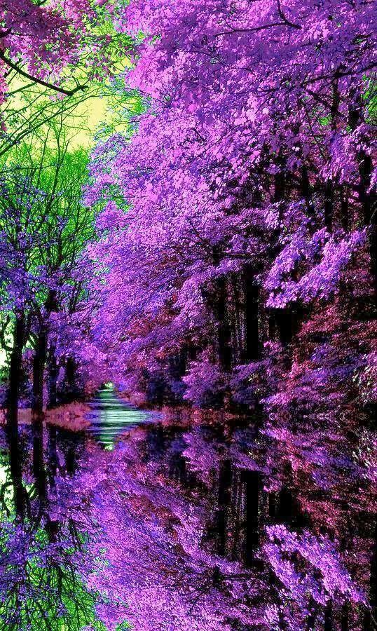 Japanese Garden Enthralled By A Mysterious Purple World Beautiful Nature Beautiful Gardens Japanese Garden