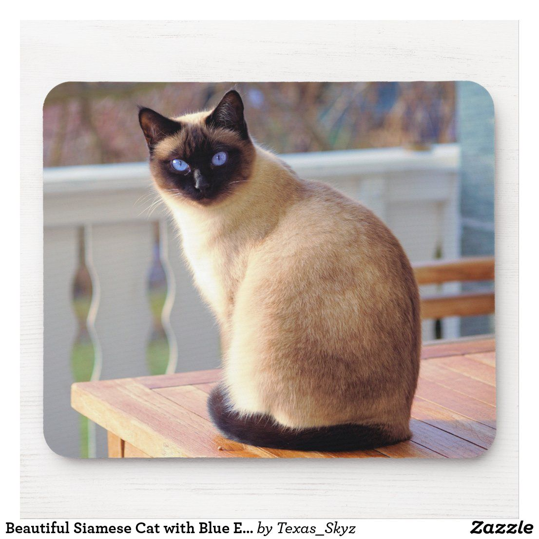 Beautiful Siamese Cat With Blue Eyes Mouse Pad Zazzle Com In 2020 Siamese Cats Siamese Cat Breeders Cats