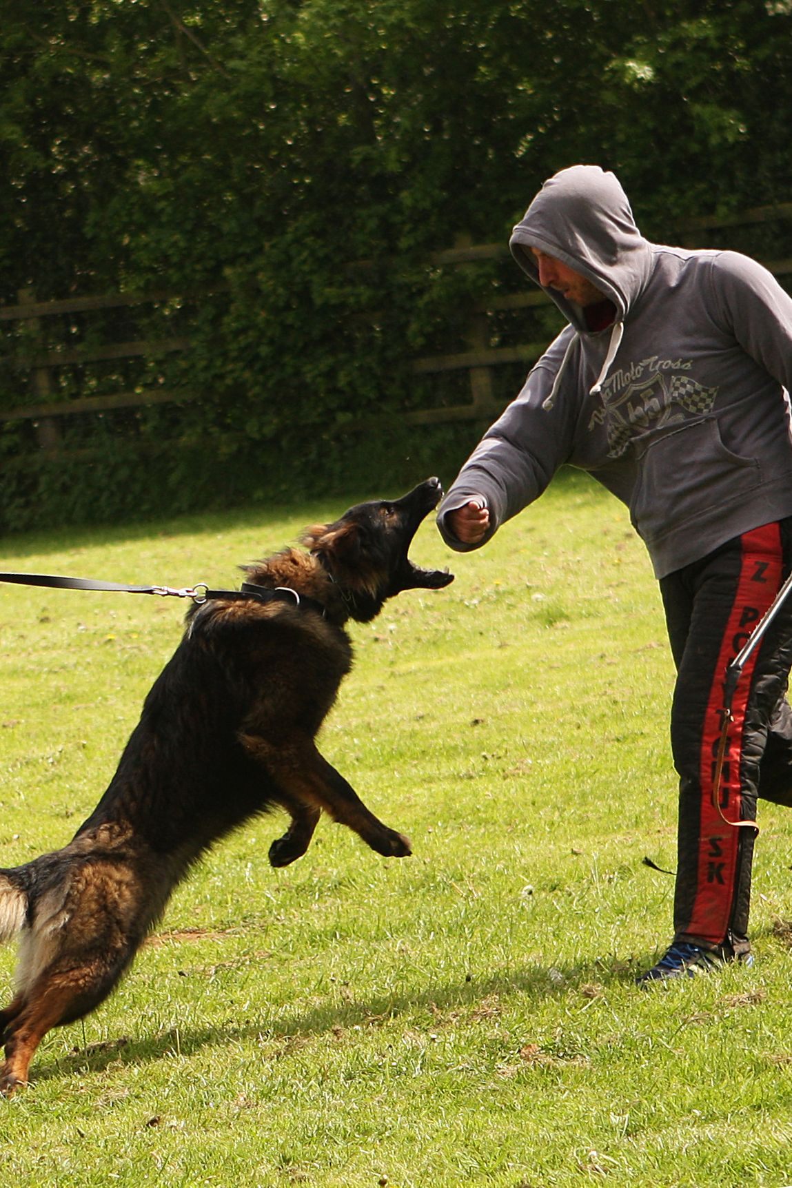 Protection Dog Training Check Out The Image By Visiting The