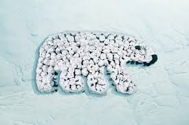 Image result for wwf event campaigns