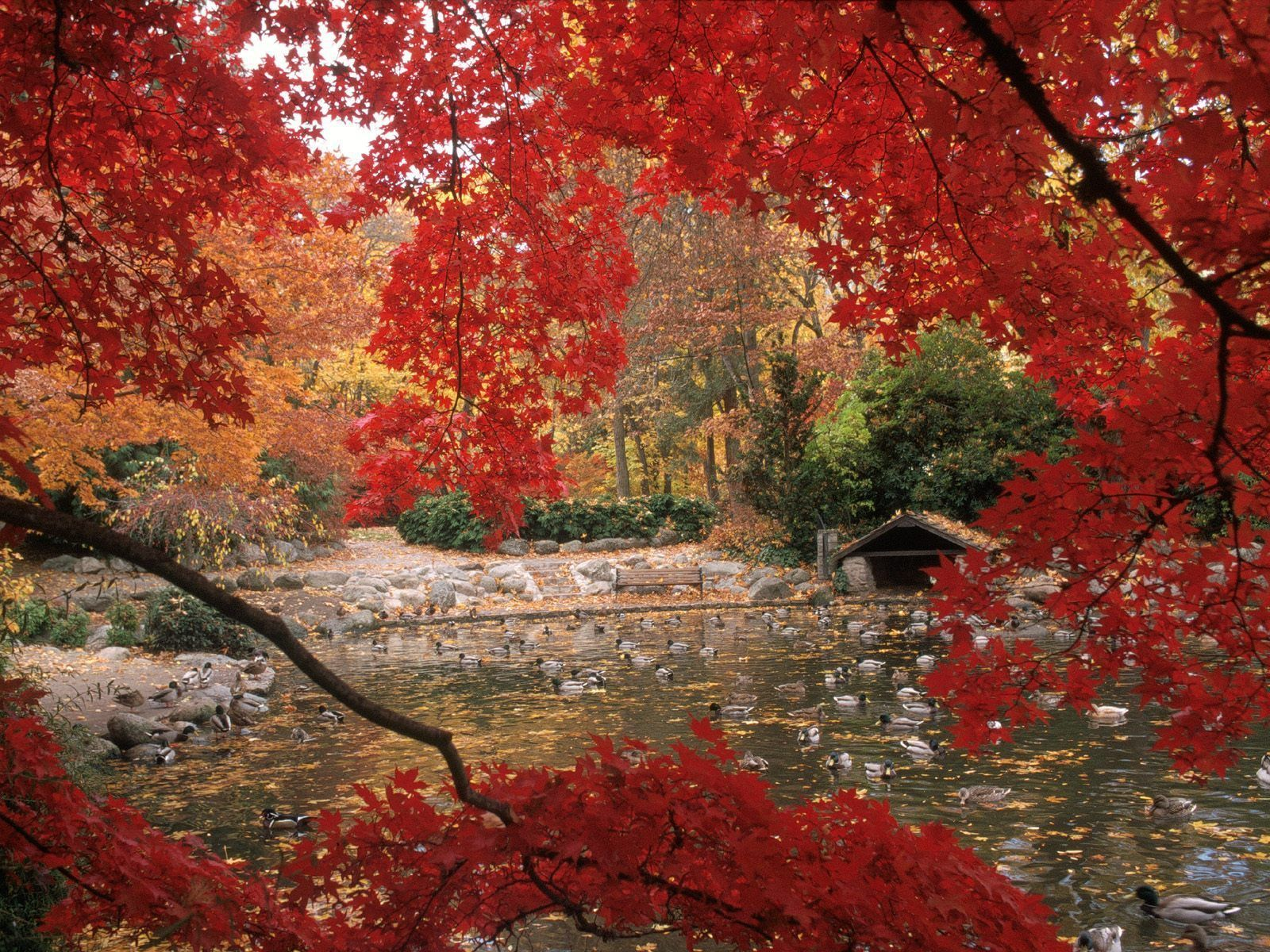autumn a· free autumn free fall screensavers and wallpapers for desktop