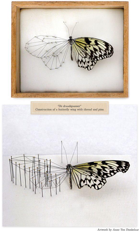 """broken butterflies"" anne ten"