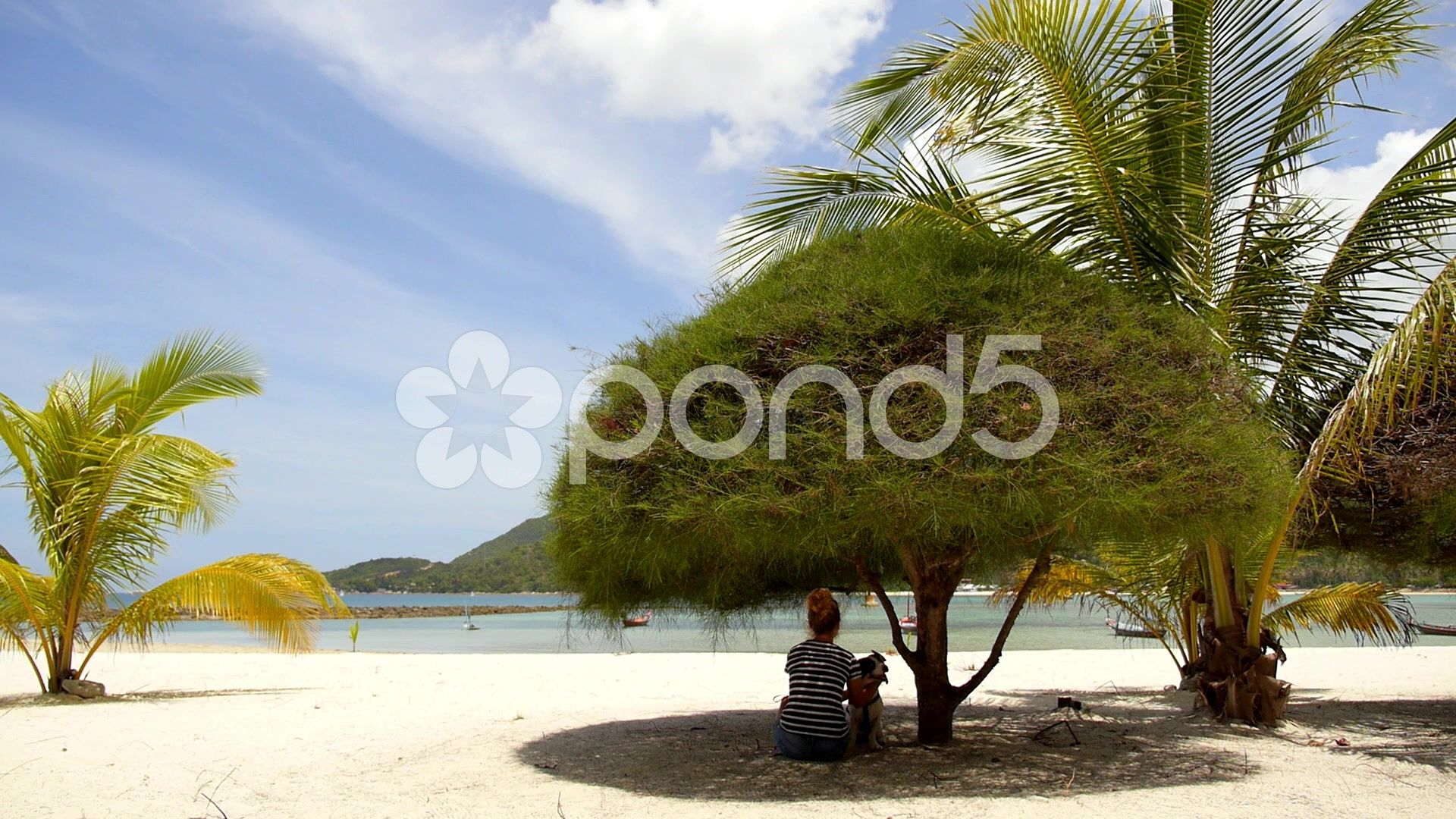 566f00cca8 Young Woman Resting at Beach with Dog under Tree. - Stock Footage | by  DiMedia