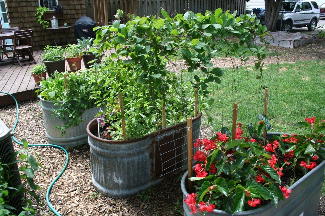 Image result for stock tank garden stock tank gardening