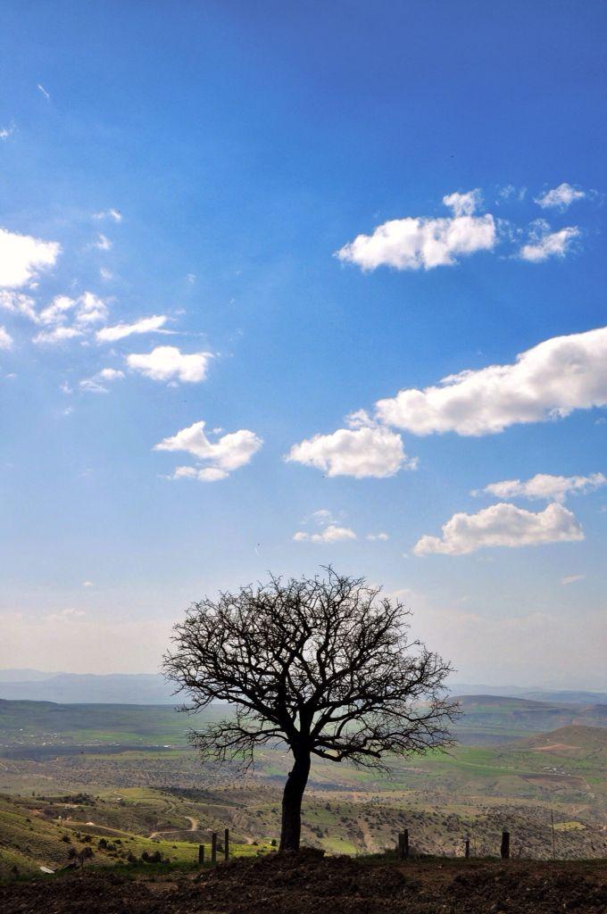 Harput alone tree