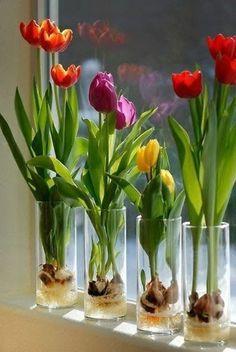 Prächtige Winterpflanzen – Blumenzwiebeln zu Hause züchten