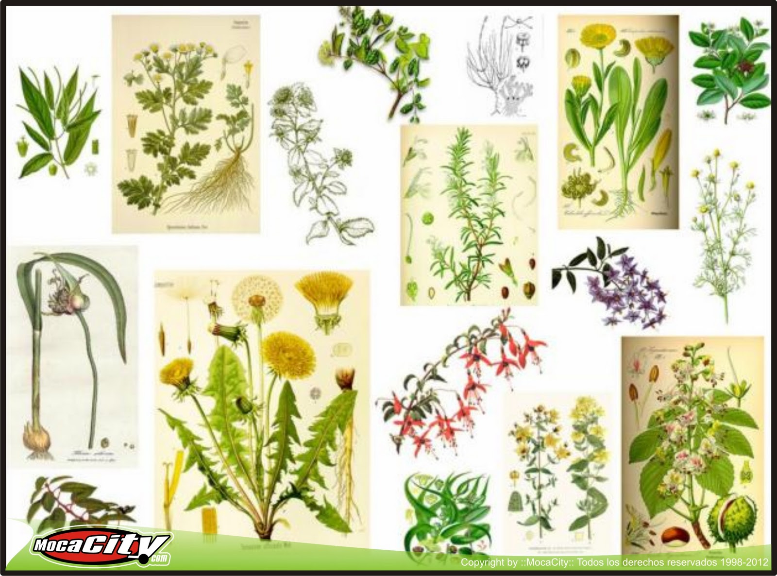 Plantas Foraneas Buscar Con Google Cricut Projects Table Decorations Cricut