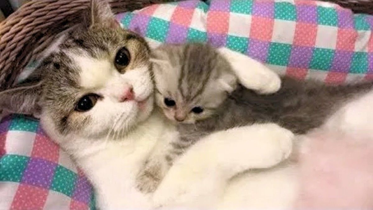 The Baby Cat Tack Hug From Her Motherhttps I Redd It Ezb9jo83gmm11 Jpg Cute Baby Cats Baby Cats Cute Kitten Gif