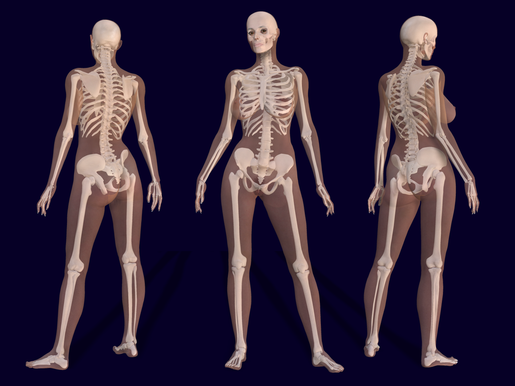 3d Female Skeleton Anatomy Pierre A Riffard Wikipedia The Free
