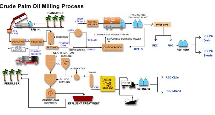 Crude Palm Oil Process Chart Palm Oil Palm Plant Oils
