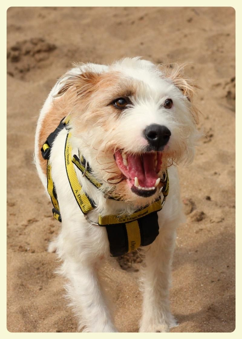 Dogs trust rhodrey rehoming dogs trust dog adoption