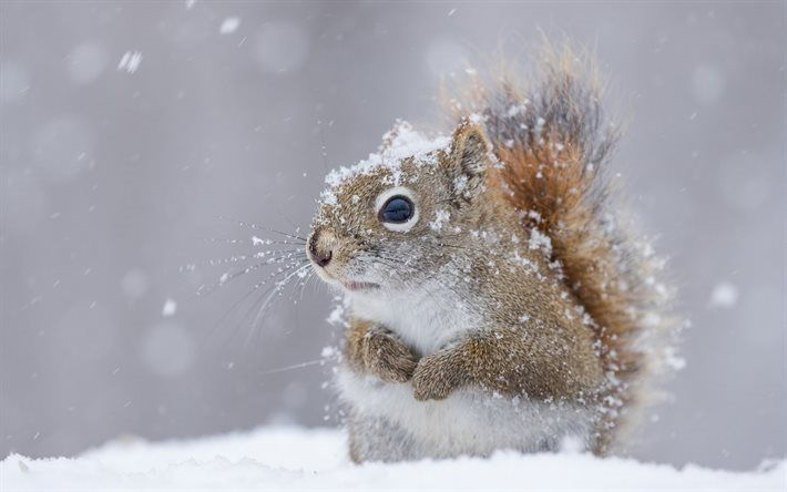 Scarica sfondi scoiattolo simpatici animali inverno for Immagini inverno sfondi