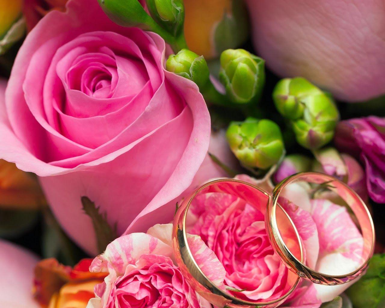 اشكال بوكيهات ورد للعروسة اجمل باقات ورد للخطوبة Pink Rose Flower Flowers Rose
