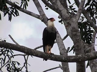 AMAZÔNIA EM IMAGENS: Serra do Tepequém - Roraima