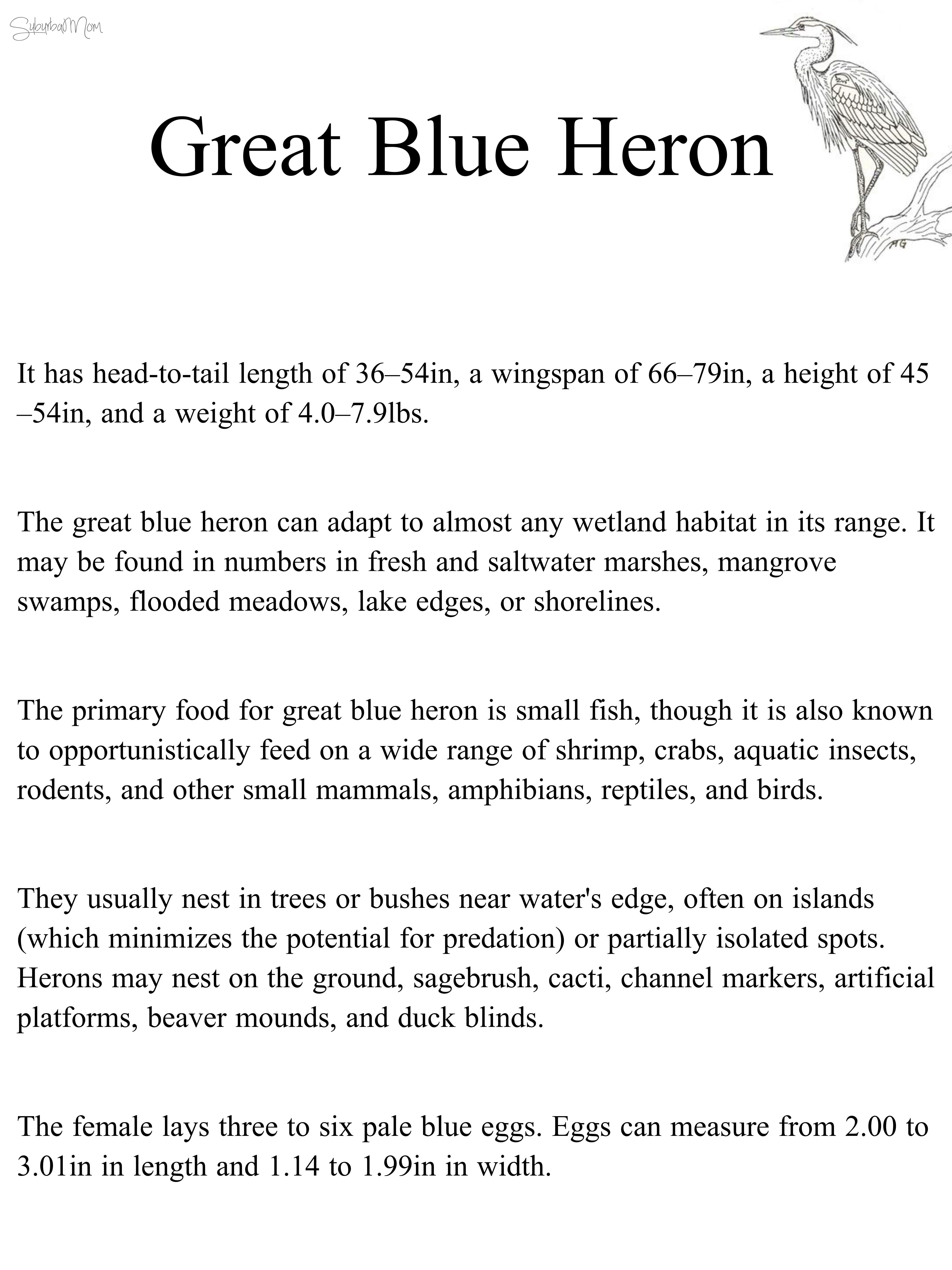 blue heron, great blue heron, habitat, science, natural science ...
