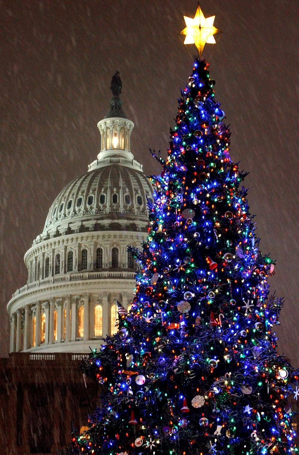 Christmas Traditions The Other Washington Christmas Tree Is The Capitol Christmas Tree Which Has Been An A Christmas Lights Christmas Tree Beautiful Christmas