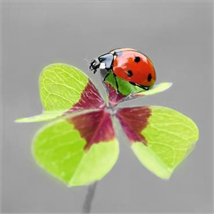 Beautifulnativeplants Ladybugs Lady Beetles Or Ladybird: Pin By Lesli Stabenow On Pictures
