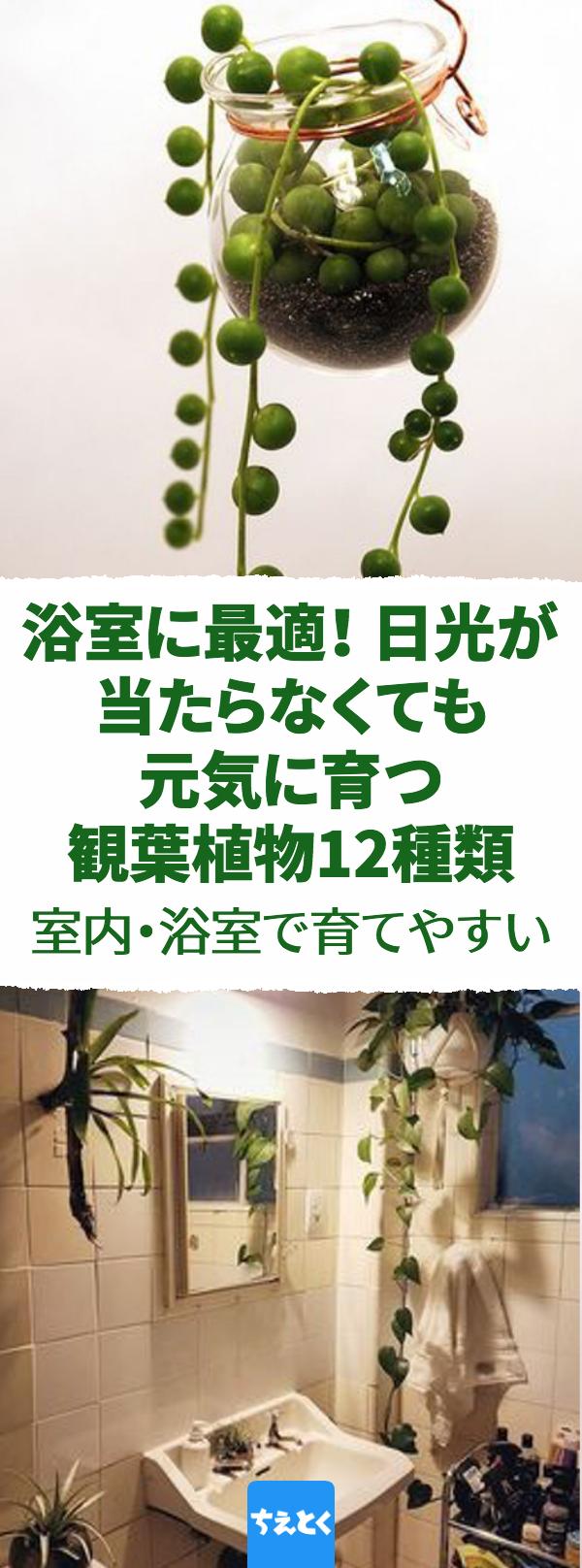室内 浴室で育てやすい観葉植物12種類 日差しが少なく湿気の多い環境