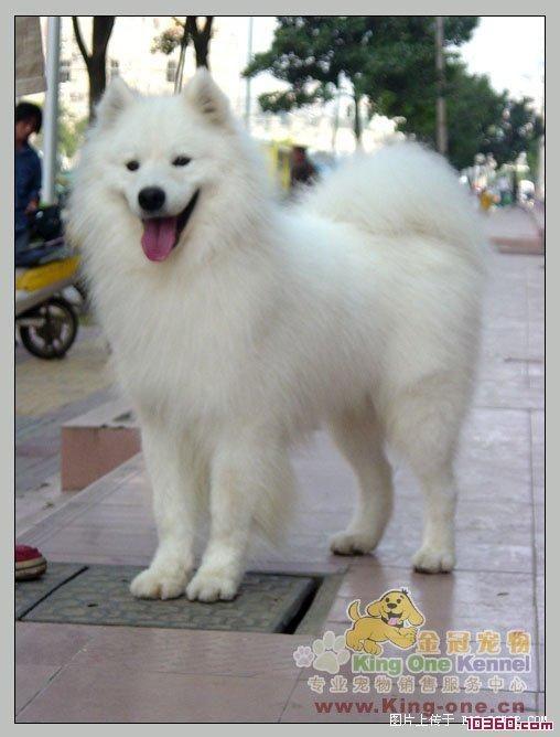 Alaskan Malamute Siberian Husky Mix puppies free | cute ...
