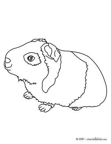 This lovely Guinea pig coloring page is one of my favorite