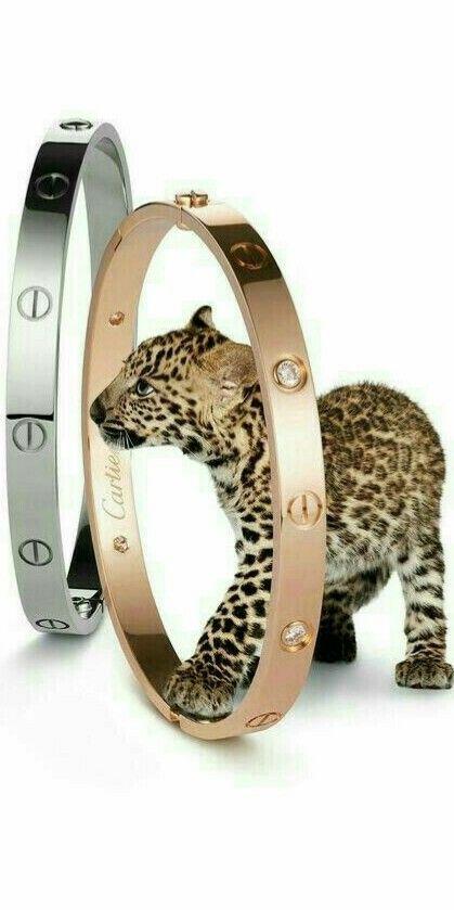 a1211f2f1bc Pin de Dayacosta Da Costa Silva em gatos e tigres animais