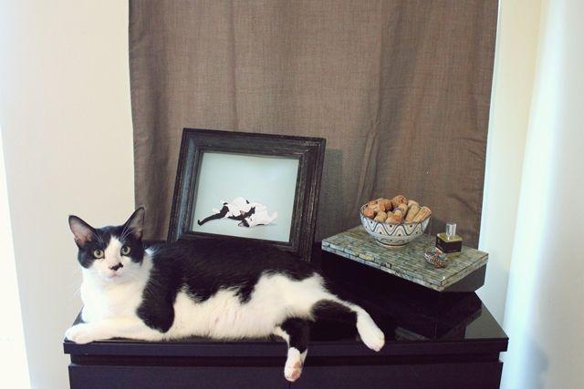 Custom Pet Portrait by Diesel - Giveaway - Shrimp Salad Circus
