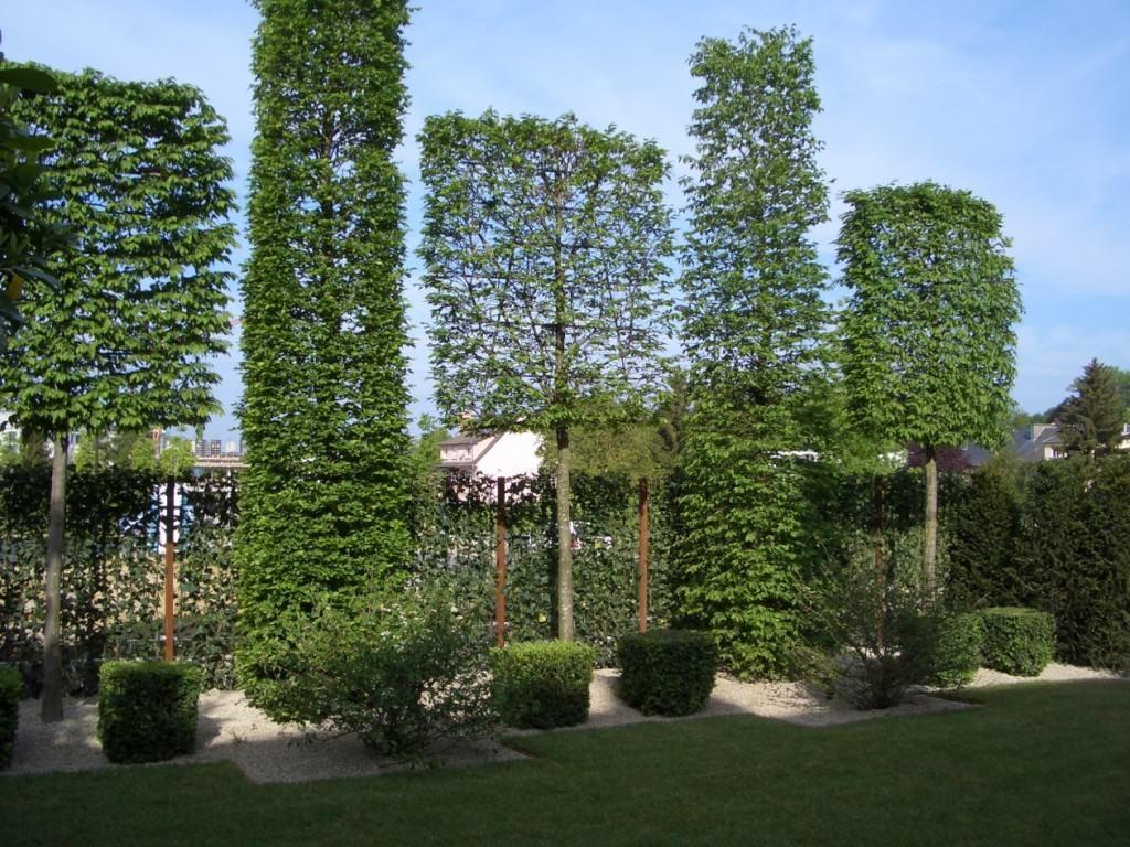 Hainbuche Spalierbaume Bepflanzung Garten Garten Grundriss