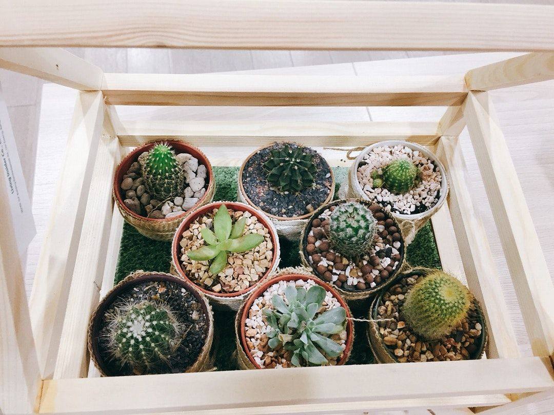 Backyard Medicine medicinal plants bel How to water